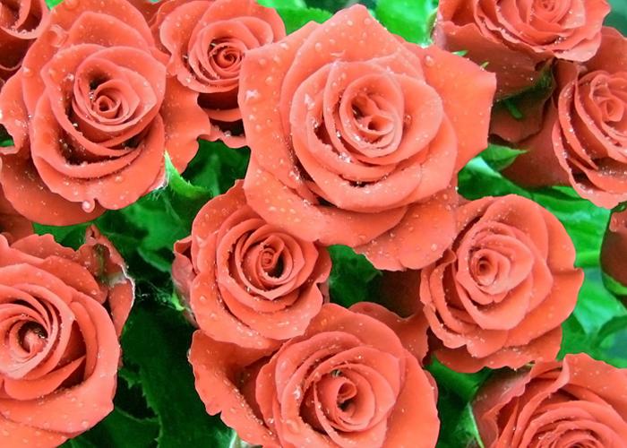 букет роз от театра Дилижанс